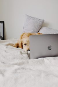 dog lying on soft bed in front of laptop 4297819 200x300 - dog-lying-on-soft-bed-in-front-of-laptop-4297819